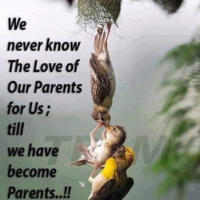 i-love-my-parents-quotes-3