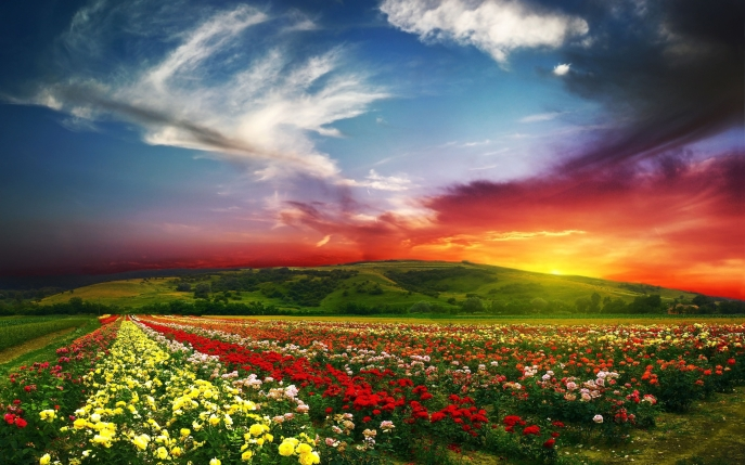 Flower-Fields-HD